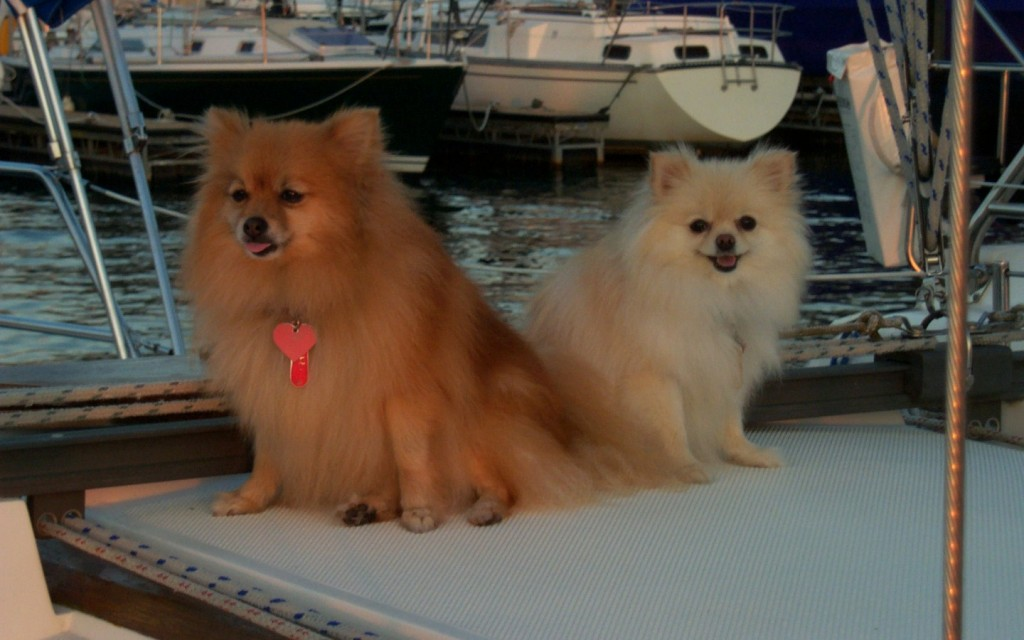 Our poms Sable and dottie. They loved to go to the boat.  They passed before we transitioned to Yacht A Fun