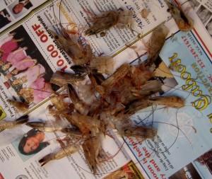 Half pound heads-on shrimp were $3
