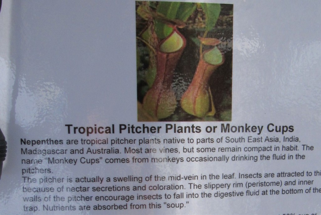 0215 hanging plant info