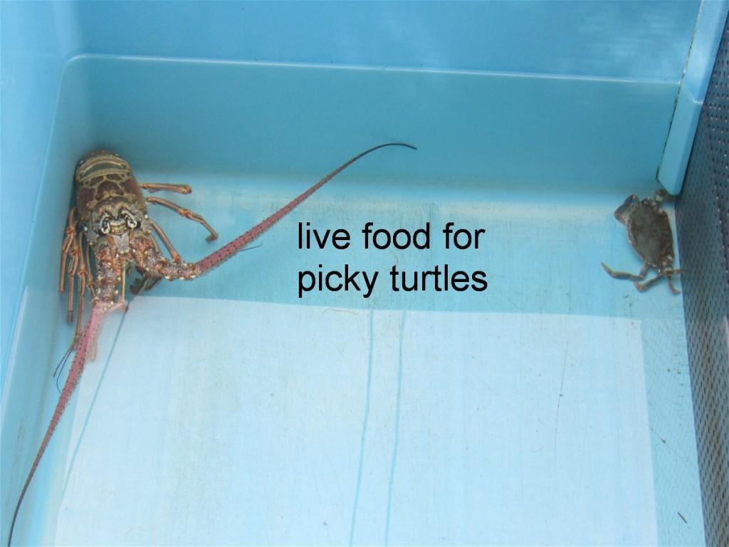 11 live food