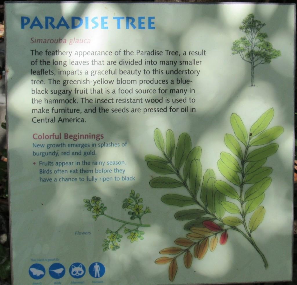 24 paradise