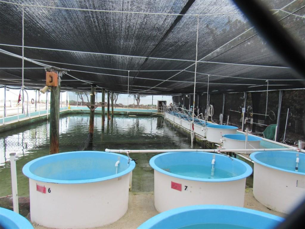 6a original pool