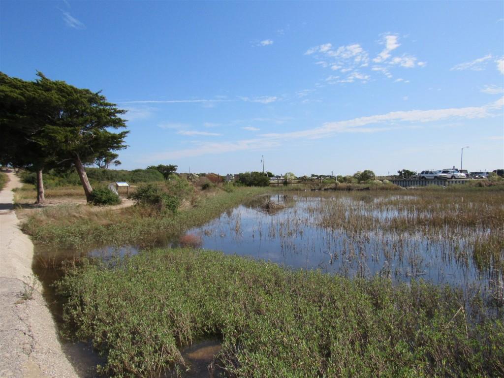 3009 salt marsh